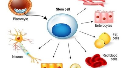 An image about parts of stem cell