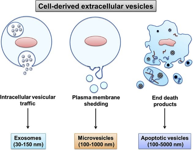 An image about a membrance process of extracellular vesicles