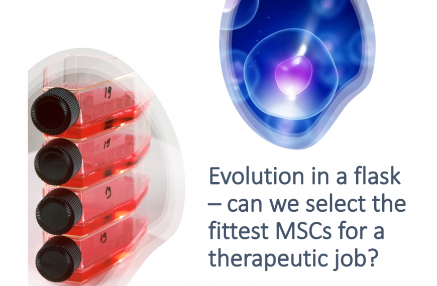 Evolution in a flask – can we select the fittest MSCs for a therapeutic job?
